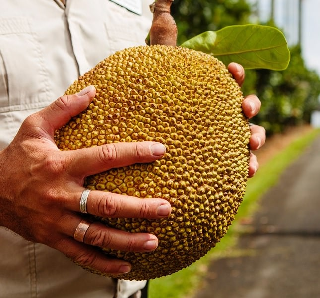 Tropical Fruit World, Northern Rivers